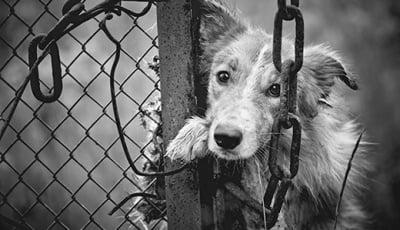 Заловени и след това безследно изчезнали бездомни кучета в приюта (кастрационен център) в Монтана. Къде са кучетата?! Защо не са описани никъде?! Кой лъже?!