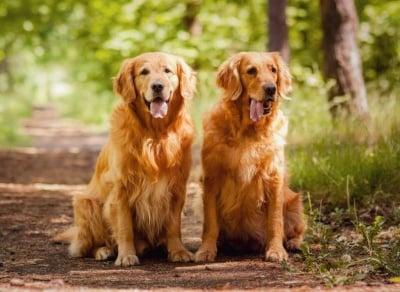 Какво трябва да знаете, за да предпазите кучето си от кърлежи и бълхи?