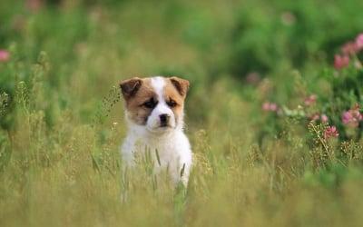 Какво куче да изберем – чистокръвно или смесена порода?