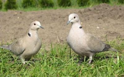 Моногамия при животните - 10 вида, които избират партньора си за ЦЯЛ ЖИВОТ