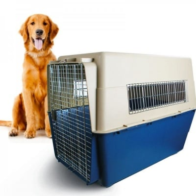 Обучение на кучето: Урок №6. Научете кучето да влиза в преносима клетка