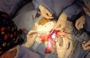 У нас бе направена първата по рода си сърдечна операция на куче-водач