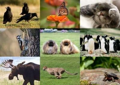 Мислите си, че познавате животните? Направете този забавен тест, за да проверите своите знания