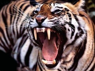 Тест - Познавате ли зъбите при различните животни? Проверете.
