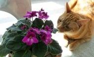 10 домашни растения, които са опасни за кучетата и котките