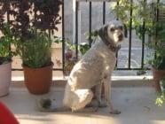 Ето как едно пътуване с куче от Гърция към България се превръща в истинско изпитание