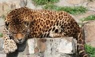 Зоопарк (
