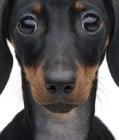 Какво откриваме в лицата на животните?