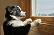 15 неща, които тайно прави всеки стопанин на куче