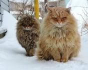 20 животни, които няма да измръзнат през зимата