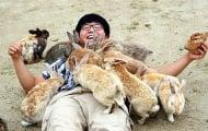 20 невероятни места, на които животните са повече от хората (1 част)