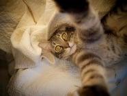 20 шеговити причини да имаш котка у дома
