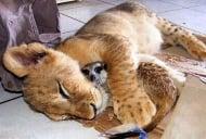 20 снимки на обичащи се животни, които ще стоплят душата ви