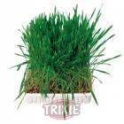 Трева за гризачи