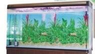 RS 150 H - аквариум с капак, осветление и дънен филтър