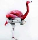 22 зашеметяващи примера за боди арт в стил животни