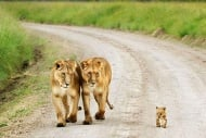 25 очарователни примера за родителска любов при животните
