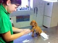 26 снимки, доказващи, че животните не обичат да ходят на ветеринар
