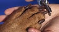 6 съвета как безопасно да изрежем ноктите на кучето