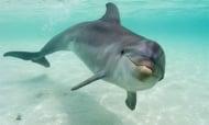 За първи път в България ще бъде направена аутопсия на делфин