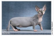 Уникална изложба на редки породи котки - 17 и 18 май