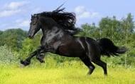 Кой орган липсва при конете?