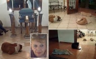 Бездомни кучета дойдоха на погребението на жена, която ги храни