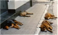 Община София обеща да реши проблема с бездомните кучета до 2016 г.
