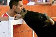 Разтърсваща снимка - бик от корида познава стопанина си в публиката и отива да го целуне