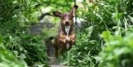 Топ 5 лечебни билки за кучета
