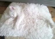 Царете на камуфлажа - 20 домашни животни, които трудно ще откриете вкъщи