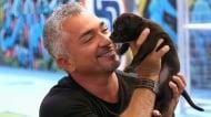 Сизър Милан изчисти всички обвинения към себе си в злоупотреба с животни