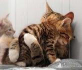 Да се научим на нежност от котките