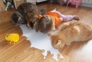 Деца, които биха дали всичко да бъдат животни