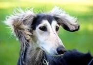 Ето какво означават кучешките звуци на човешки език