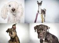 Фотограф помага на изоставени кучета в приют да си намерят нов дом