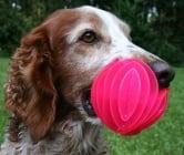 Как да играете с възрастно куче?