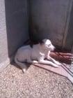 Една различна история, доказваща лъжливите кастрации на кучетата в някои приюти