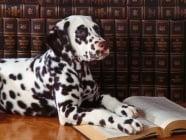 Интелигентност при кучетатa