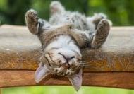 10 от най - интересните факти за това как спят животните