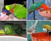 Изисквания към водата за пиене при декоративните птици