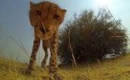 Изненадващи моменти от тайния живот на диви животни, разкрити с камера