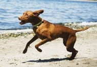 Изследване на Опорно - двигателната система при кучето