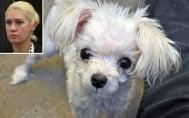 Жена, изхвърлила ранено кученце от кола, отива в затвора