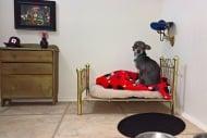 Жена сътвори на кучето си спалня под стълбите на своя дом и детайлите са впечатляващи