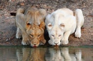 Животни албиноси, или когато природата пропусне да добави цвят (първа част)