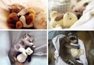 Животни и плюшени играчки, плюшени играчки и животни ...
