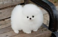 Животни, приличащи на плюшени играчки