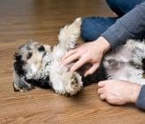 Как да галим правилно кучето си?