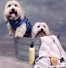 Колко често, с какво и как да къпем кучето си?